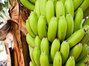 Régine de banane verte.