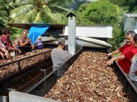 On trouve généralement des séchoirs à coprah solaires en Polynésie. Il existe néanmoins d'autres types de séchoirs comme ce séchoir à chaud notamment utilisé à Raiatea. Il permet d'accélérer la phase de séchage mais nécessite une bonne technicité afin d'assurer un séchage optimal et uniforme du coprah. Il doit en outre être réservé à d'autres productions que celle de l'huile valorisée sous forme de monoï. Le cahier des charges du Monoï de Tahiti prévoit en effet que l'huile de coco doit provenir exclusivement d'atolls coralliens et être séchée au soleil.