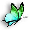 Papillon du logo du service de l'informatique de la Polynésie française