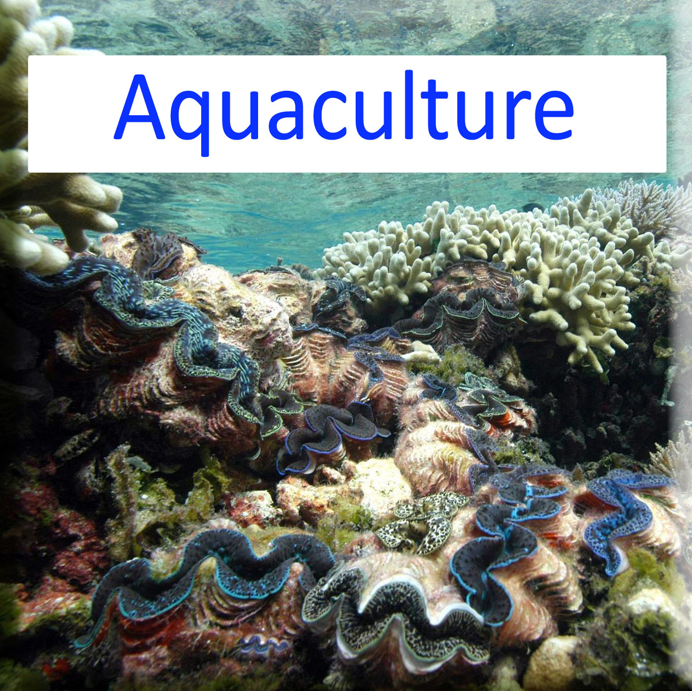 activités aquacoles