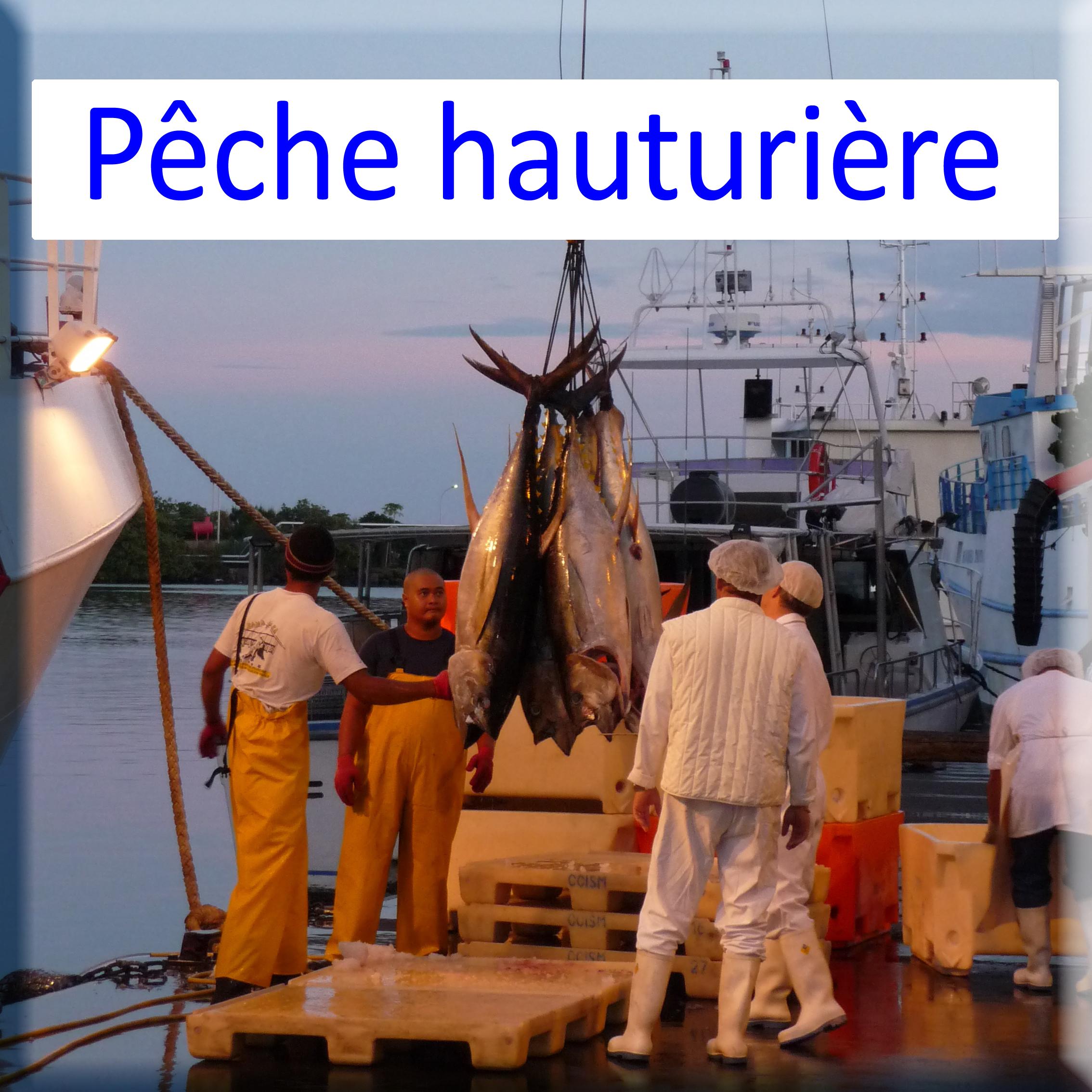 Activités pêche hauturière