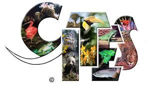 Logo CITES